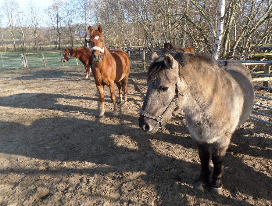 schleim lunge pferd